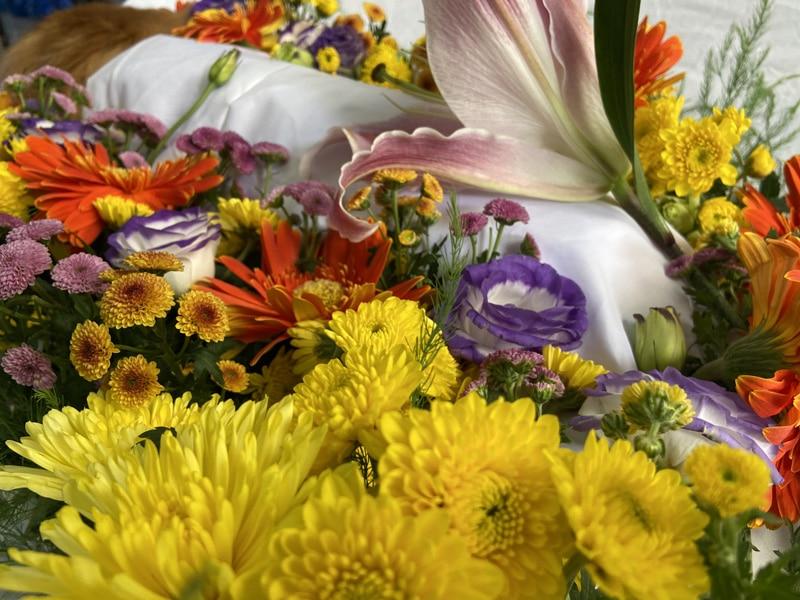goi dich vu lam hoa tang thu cung dac biet