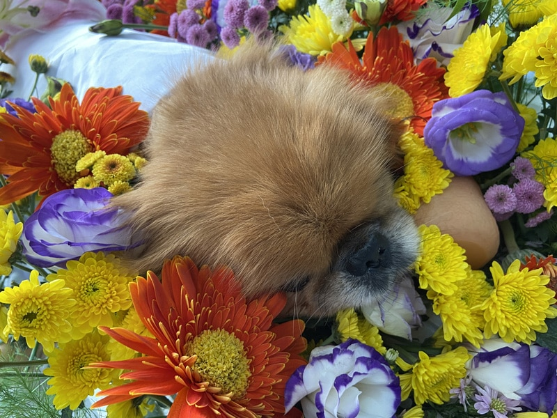 hinh lam hoa hoa tang thu cung